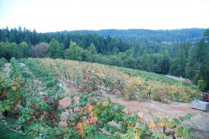 The Mourvedre is the Block with the Changing Leaves