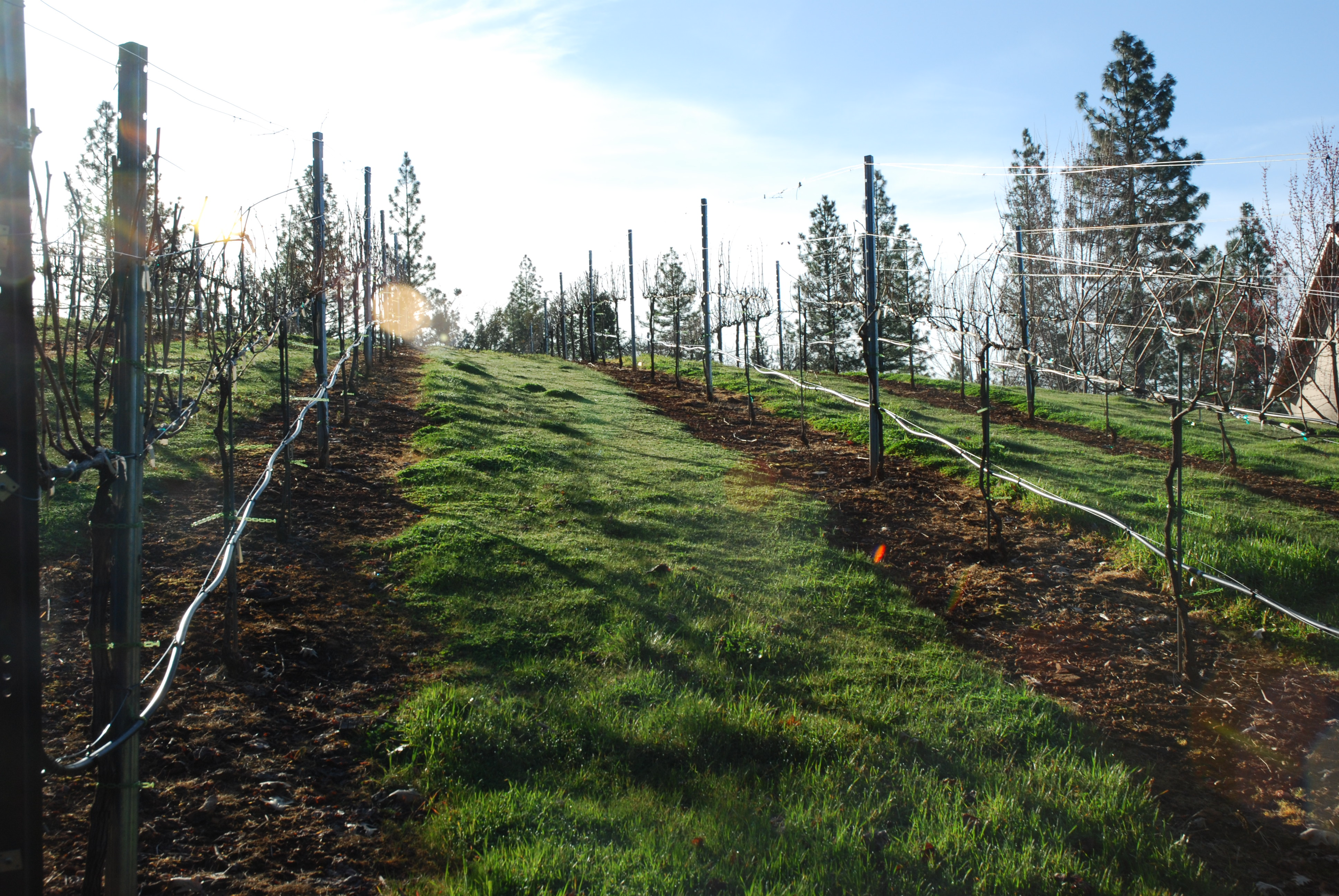 Spring Pre-Pruning, Cover Corp, and Rows Sprayed Out